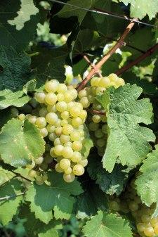 4a-grapes