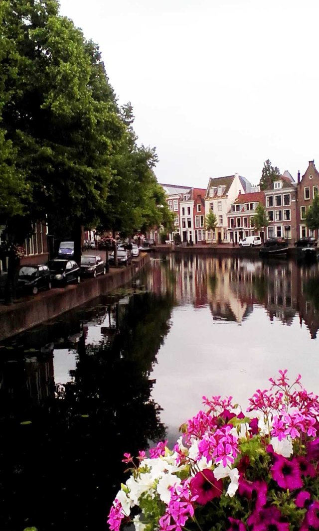 NED Leiden petunias