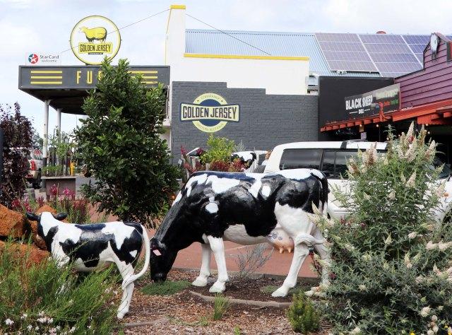 WA Cows