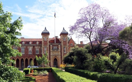 Jacarandas and Government House